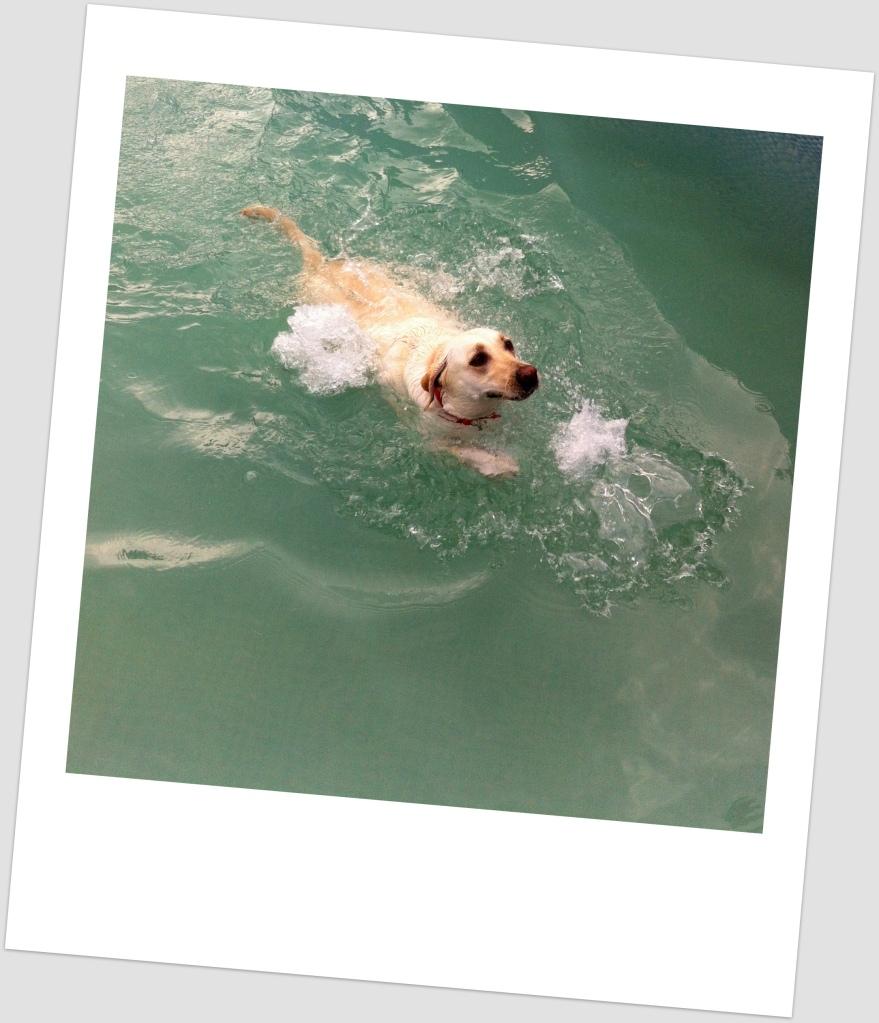 Happy Pearlie :)