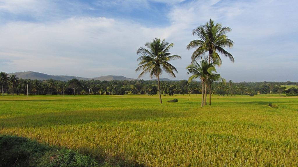 On the route between Mysore Road and Somnathpur - Karigatta Village