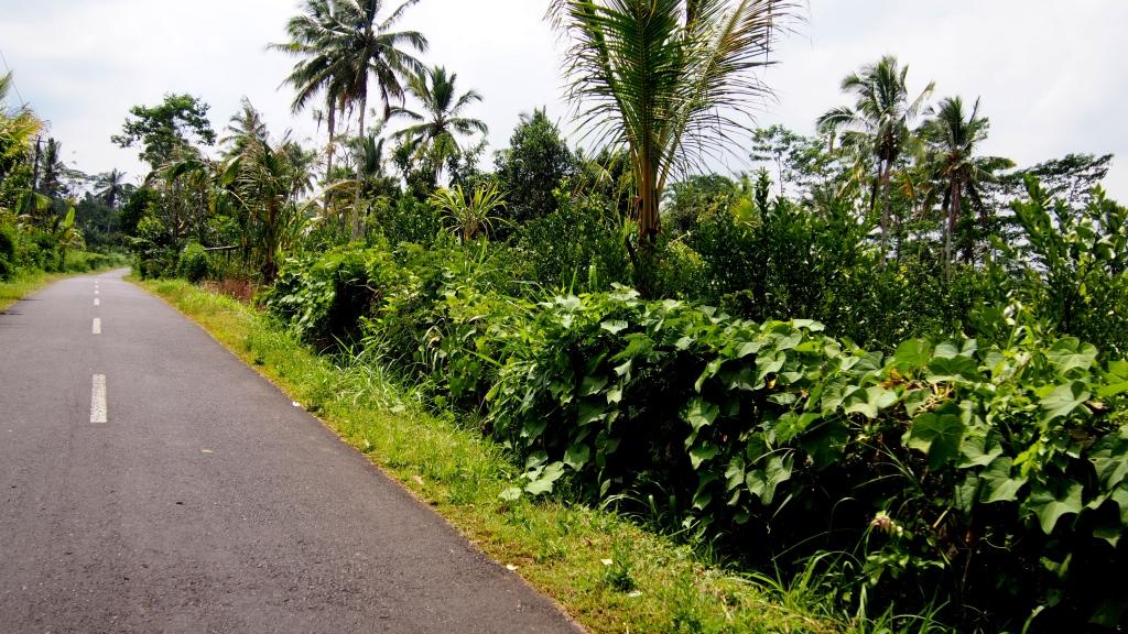 Lost between Tegallalang and Keliki :)