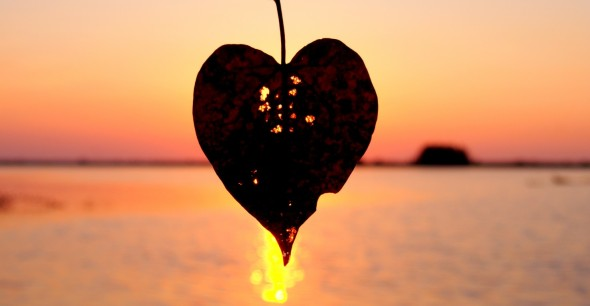 You can see the beauty of the setting sun because the leaf has withered - My love for imperfection!