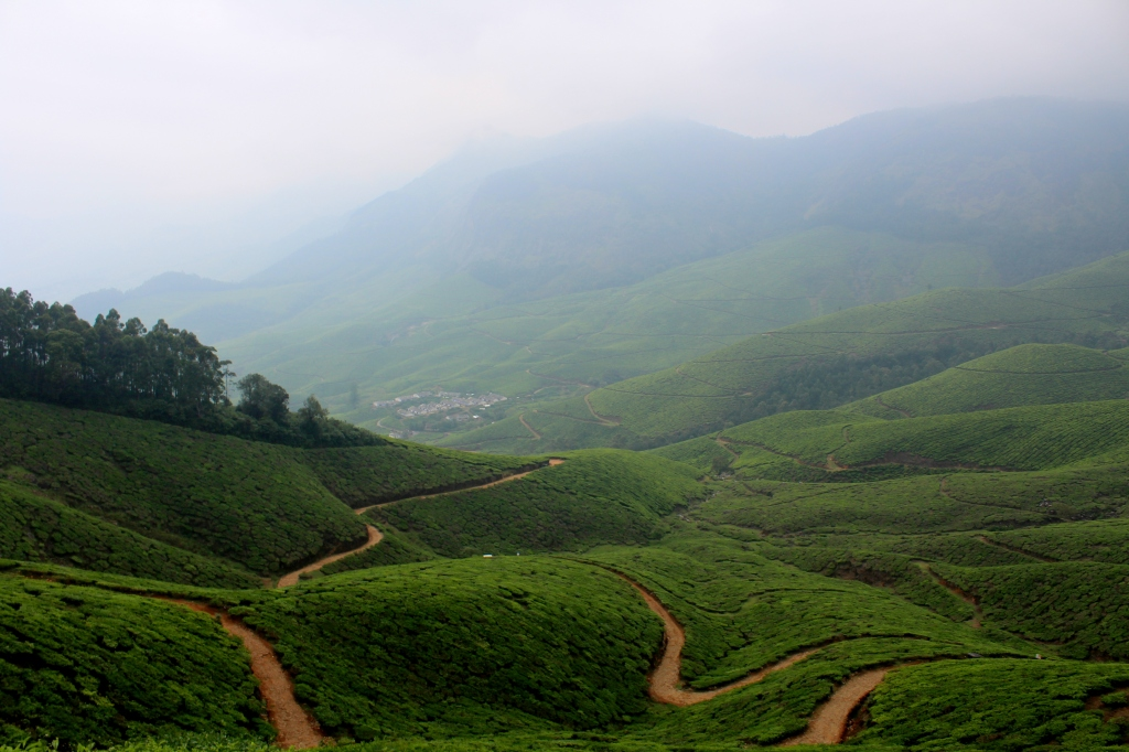 The never ending tea estates