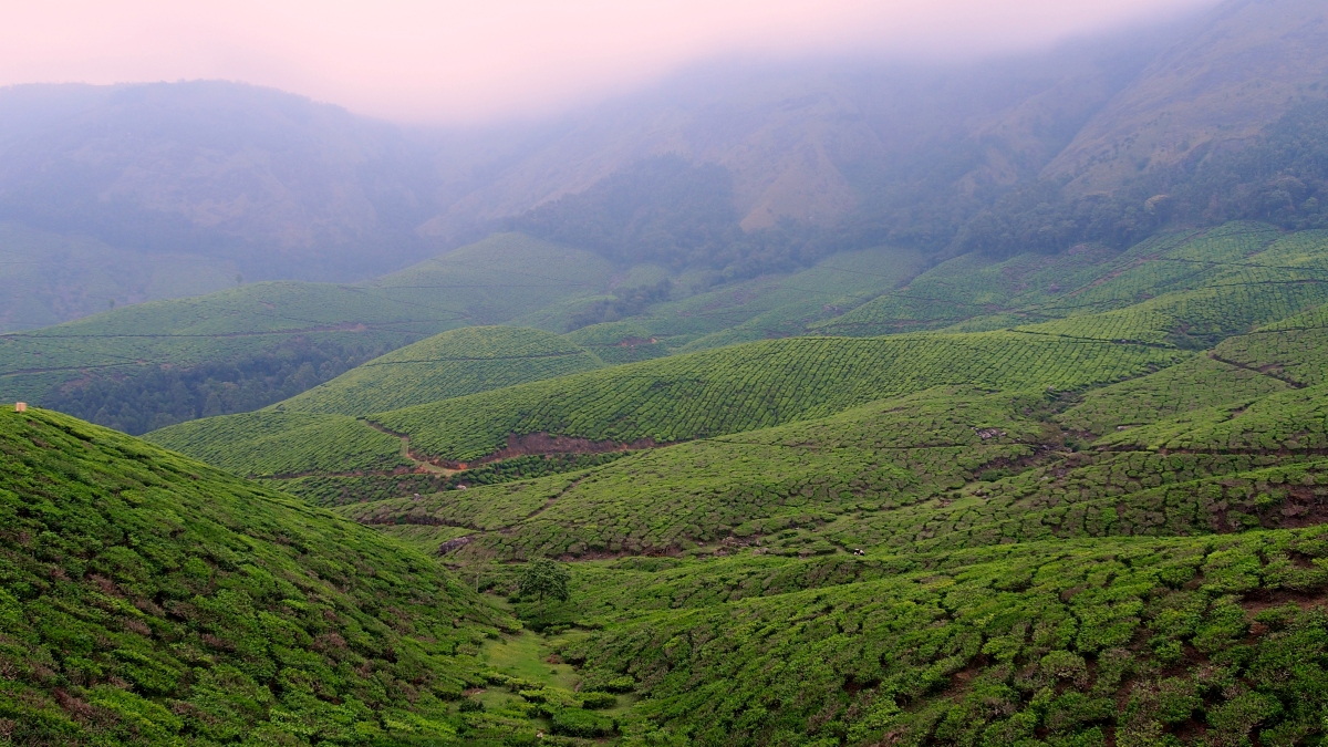 Top Station and Kollukumalai - Exploring World's highest Organic Tea Estate through a trek