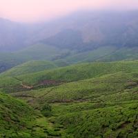 Top Station and Kollukumalai - Exploring World's highest Organic Tea Estate through a trek