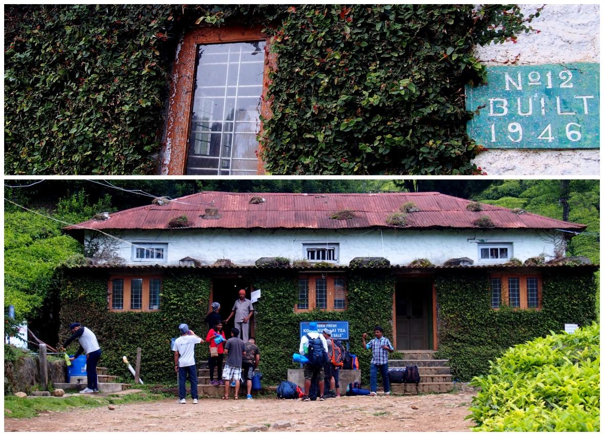 The World's Highest Organic Tea Estate
